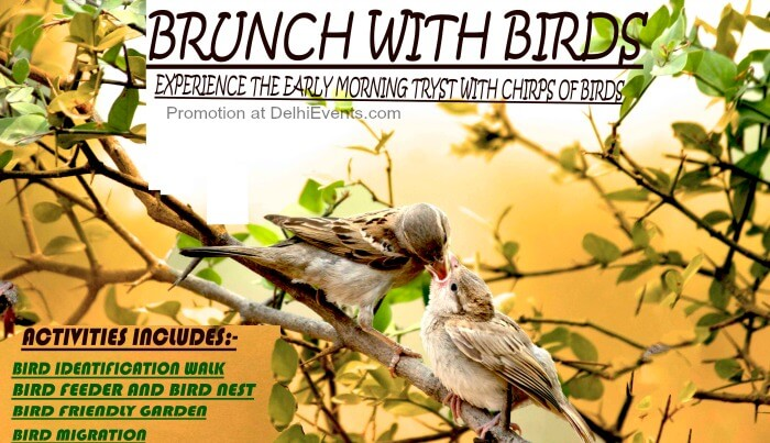Brunch Birds Asola Bhatti Wildlife Sanctuary Creative