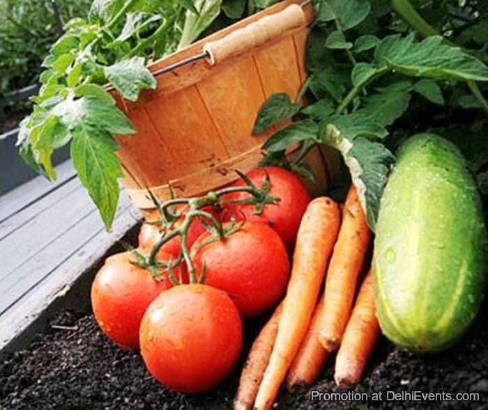 Vegetable Gardening Asola