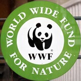 World Wide Fund Nature India Logo