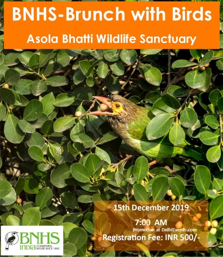 Brunch Bird Asola Bhatti Wildlife Sanctuary Creative