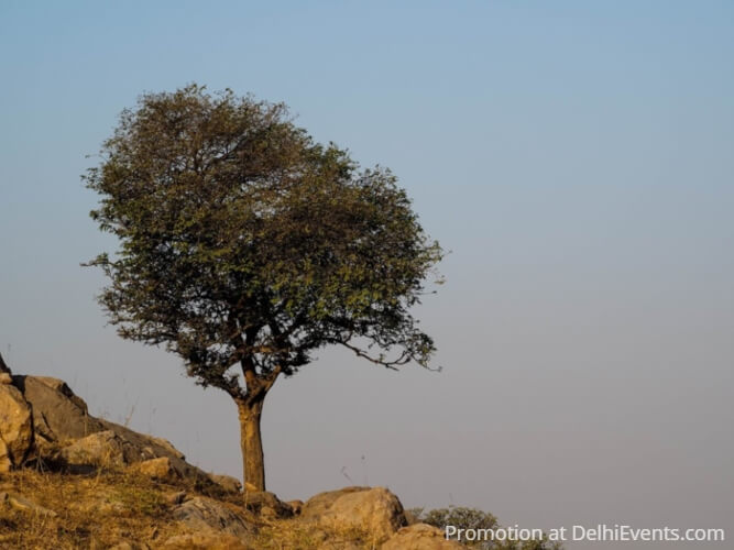 Tree Asola Bhatti Wildlife Sanctuary