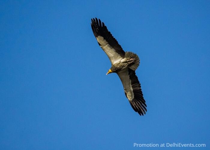 Bird Sky Asola Bhatti Wildlife Sanctuary