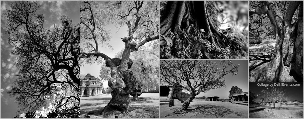 Black White Photography Trees Dev Banerjee
